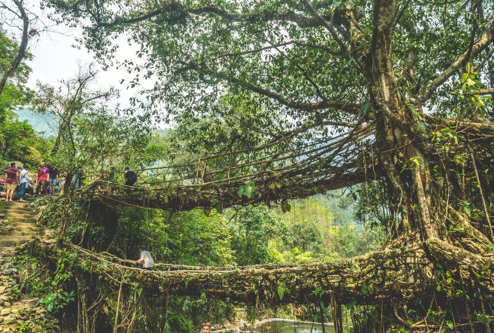 Levende brug